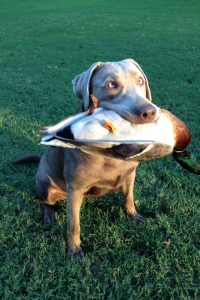 This is our girl Julia!! She loves to duck hunt!!