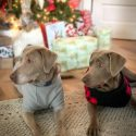 Tips On Keeping Your House Clean With Multiple Dogs